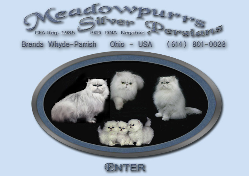 Meadowpurrs Silver Persians
